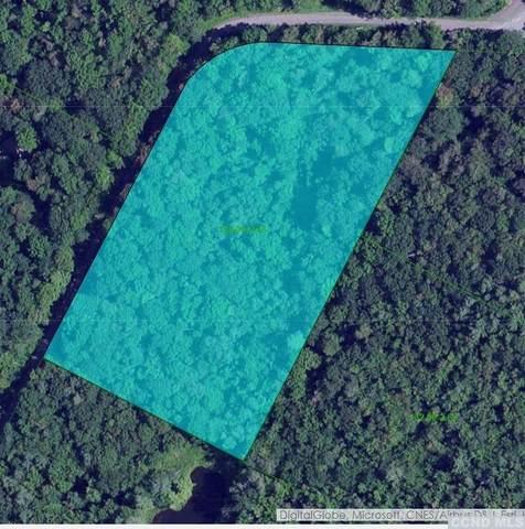 250 Wilderness Road, Jewett, NY 12424 (MLS #135891) :: Gabel Real Estate