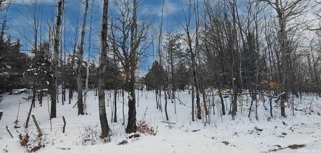 0 Harry Peckham Road, Prattsville, NY 12468 (MLS #135995) :: Gabel Real Estate