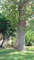 1039 Toney Terrace Ct - Photo 7
