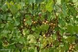 161 Pinecrest Cir - Photo 37
