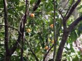 12638 Mandarin Rd - Photo 15