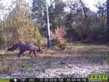 6325 Golden Oak Ln - Photo 50