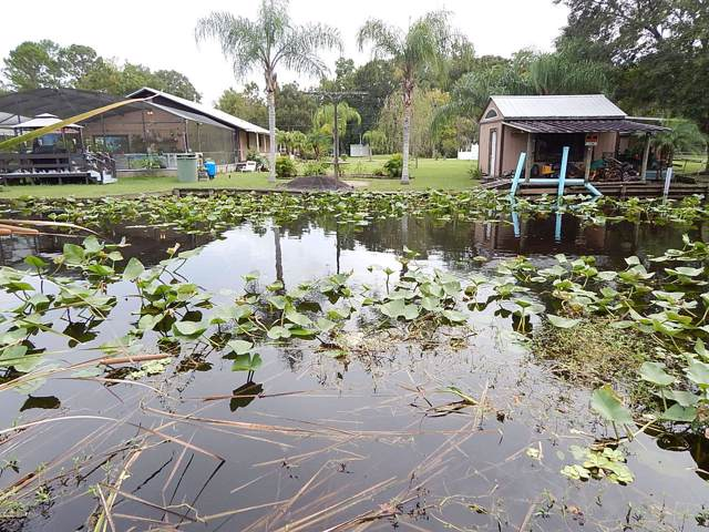121 Creekside Rd, Satsuma, FL 32189 (MLS #1015885) :: The Hanley Home Team