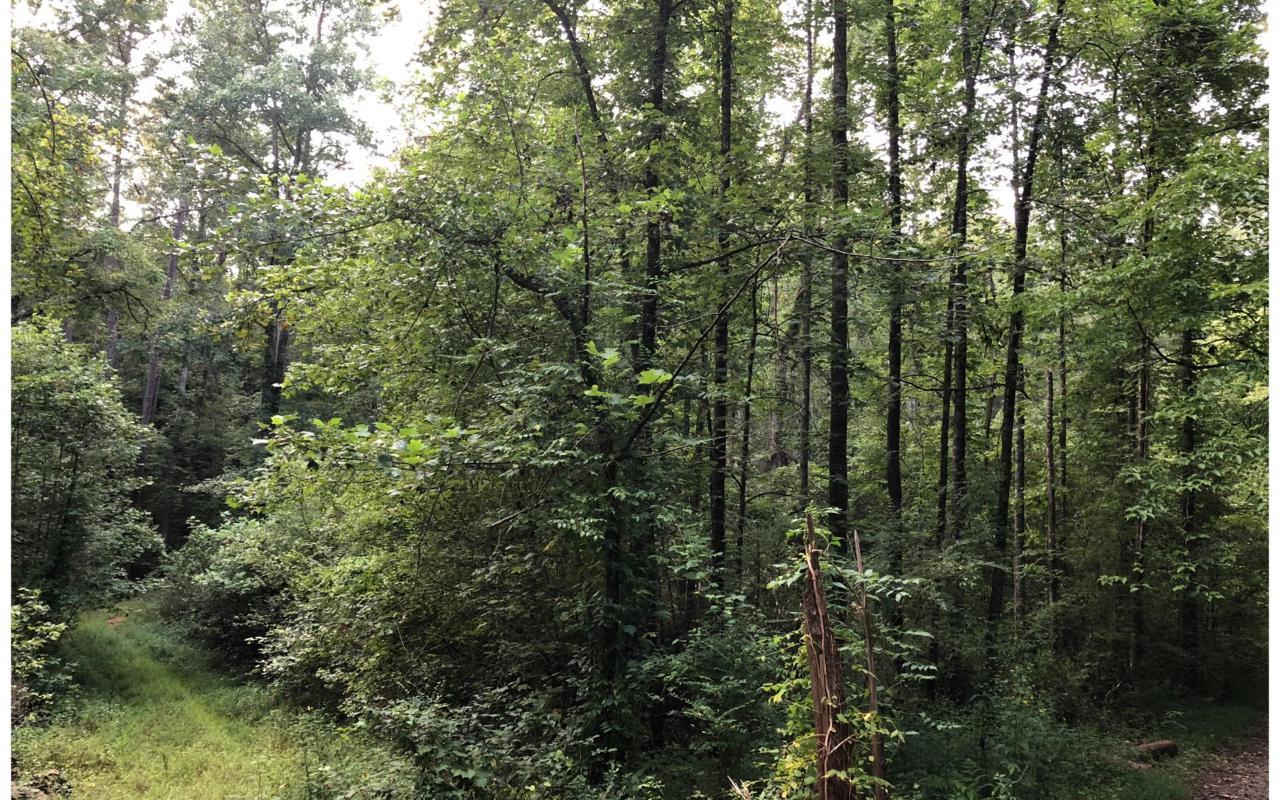 11,16 White Pine Way - Photo 1
