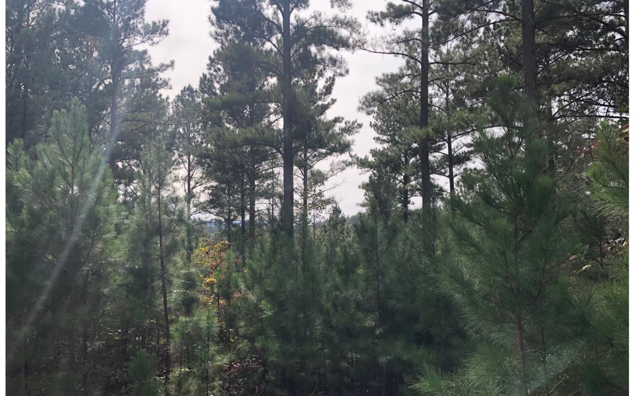 80 Tree Line Dr - Photo 1