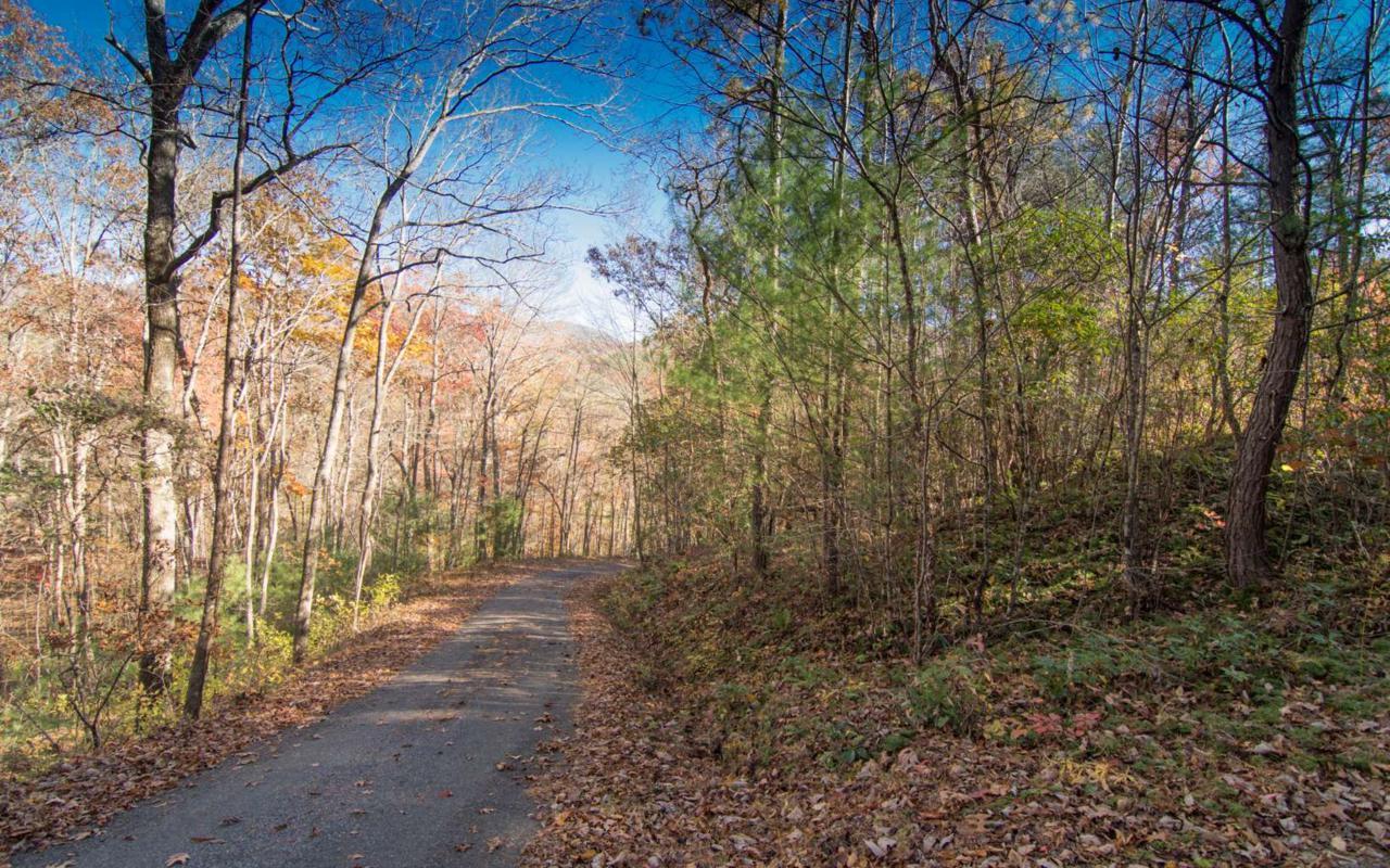 LT 5 White Oak Forest - Photo 1