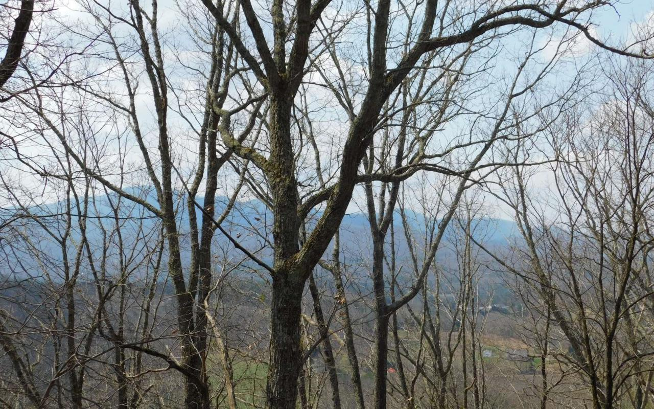 LT 19 Deer Valley - Photo 1