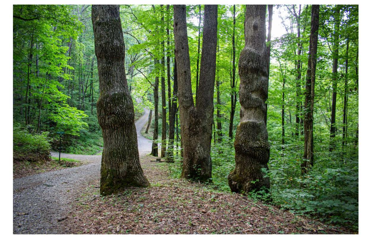 LOT 5 Shooting Creek Trail - Photo 1