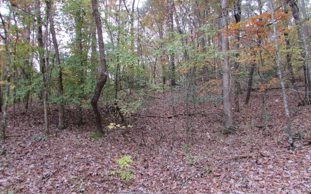 LT300 Creekside Trail - Photo 1