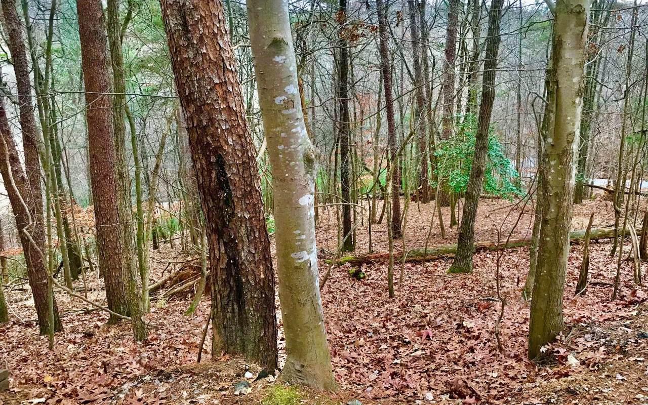 LT147 Water Oak/Rivoli Dr - Photo 1