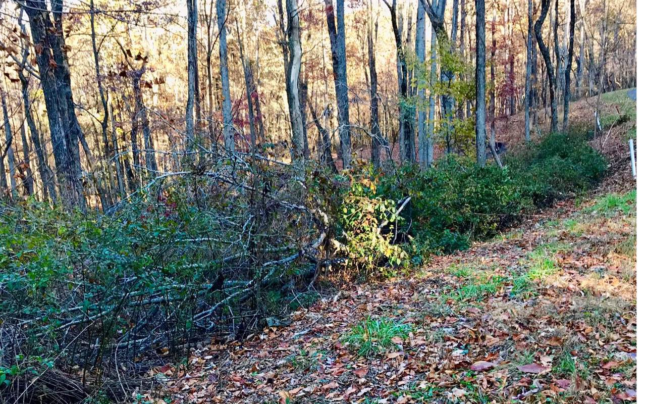 LT160 Trailwood Drive - Photo 1