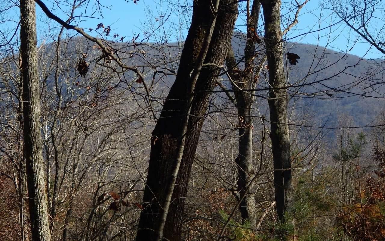 37 Bell Creek Hollow - Photo 1