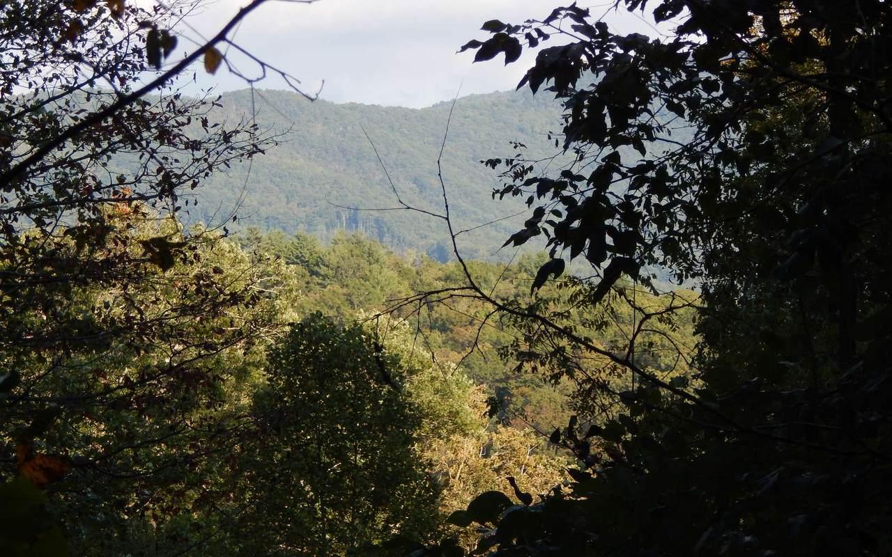 53 Bell Creek Hollow - Photo 1
