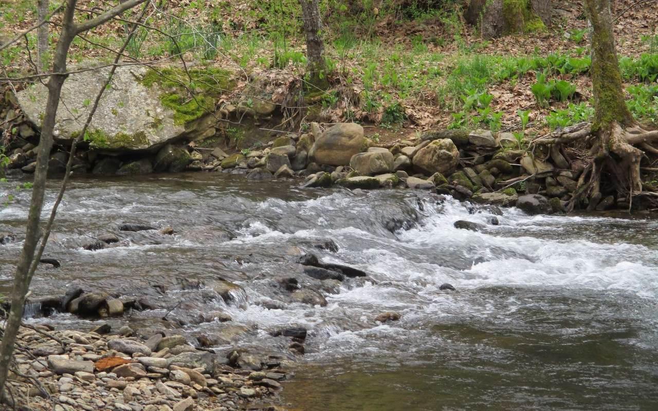 TR 1 Muskrat Creek Road - Photo 1