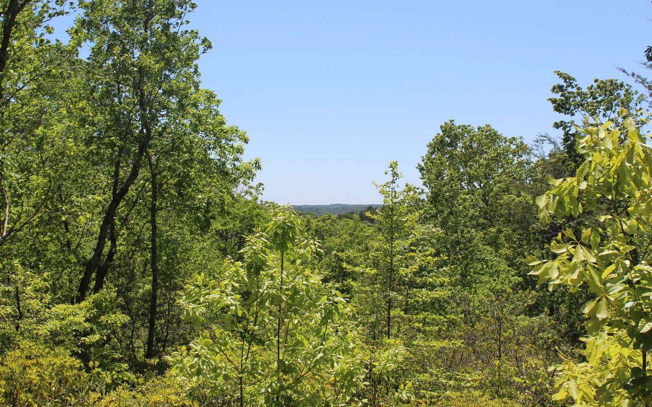 LOT 5 Owl Mountain Road - Photo 1