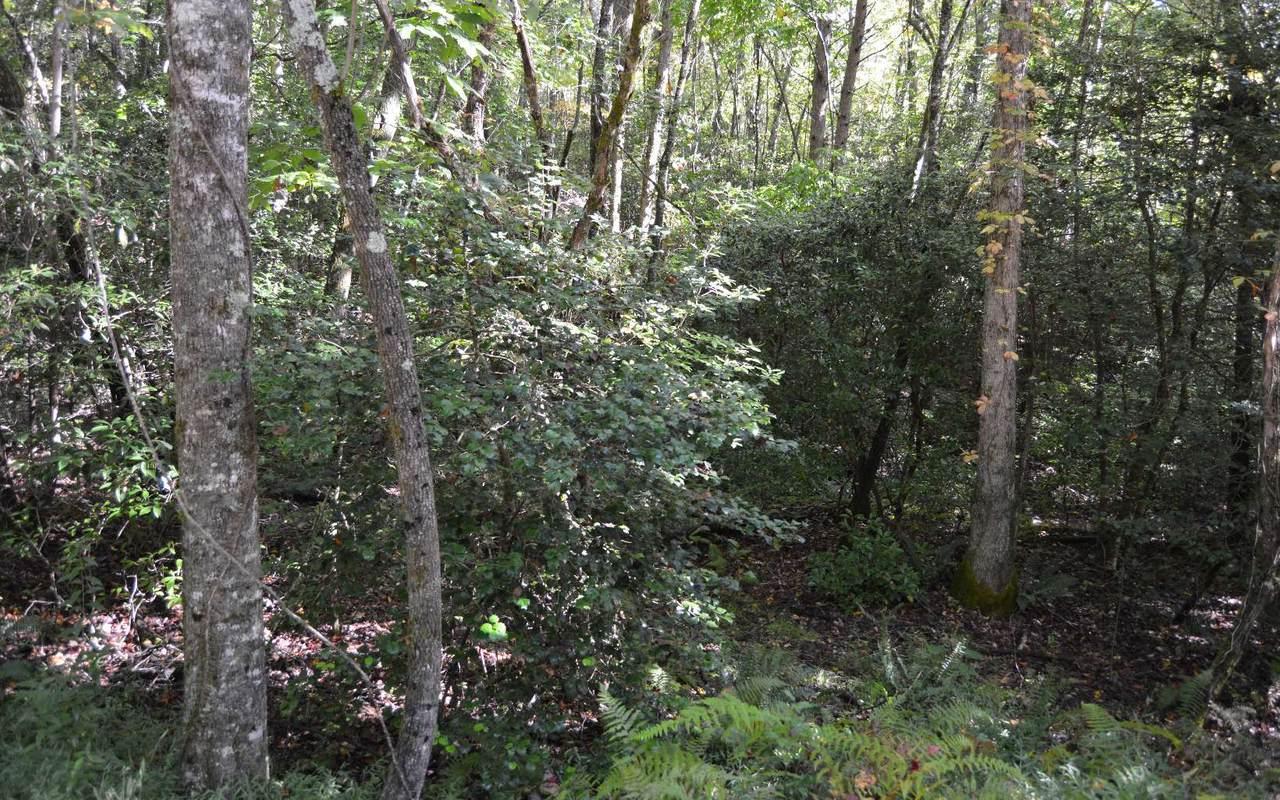 TR 7A Willow Ridge - Photo 1