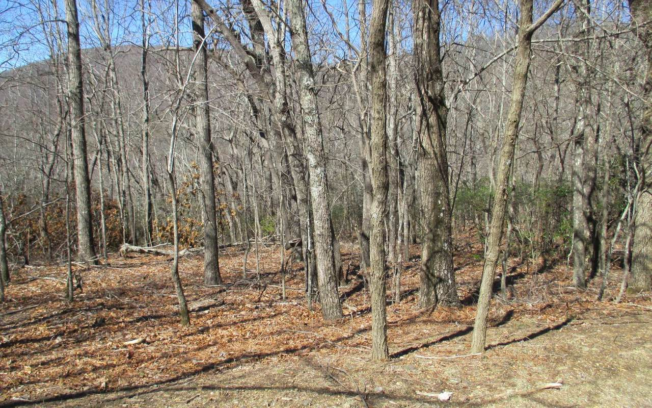 LOT 4 Boundry Creek Trail - Photo 1