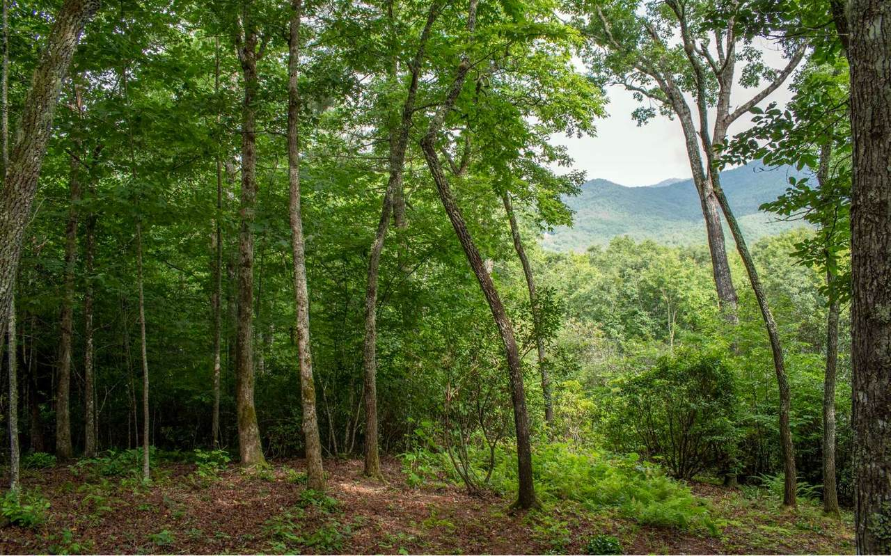 LT 21 White Pine Ridge - Photo 1
