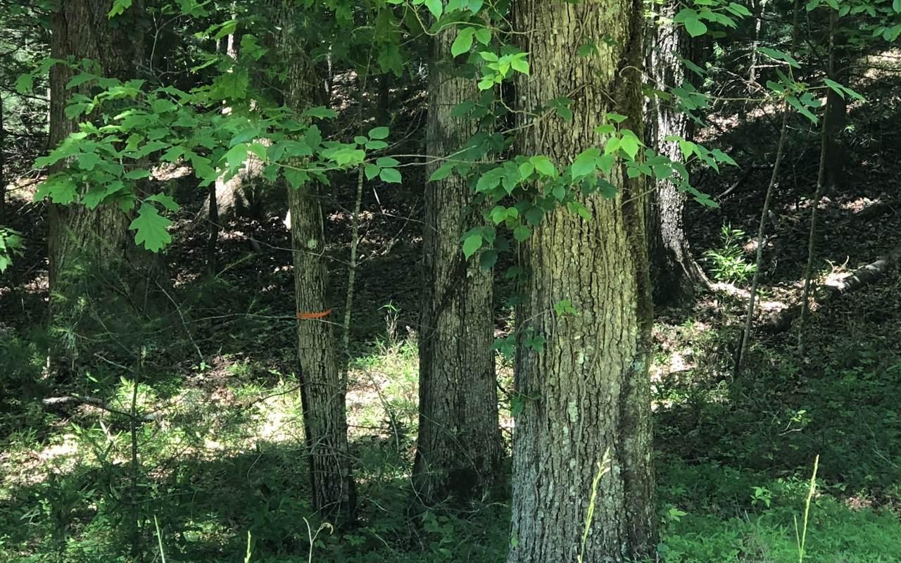 0 Cutthroat Ridge - Photo 1