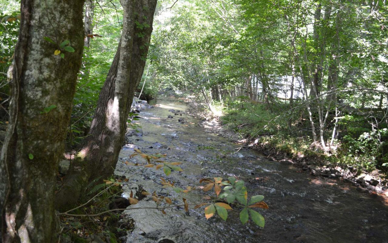 311 Mountain Meadows Dr - Photo 1