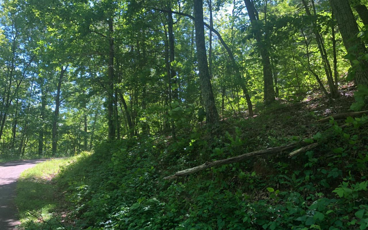 LT 16 Ross Ridge - Photo 1
