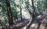 #109 Big Pine Drive - Photo 5