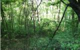 14 Woods Of Hunter - Photo 1