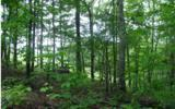 #10 Victoria Woods - Photo 1