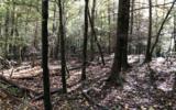 37+AC Mountaintown Trail - Photo 14