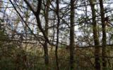 5A&3A Shearer Creek - Photo 1