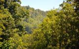 Chestnut Gap - Photo 1