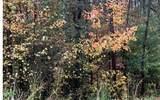 LT3 Chimney Ridge - Photo 10