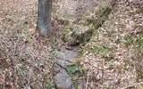 Bear Creek Camp Road - Photo 1