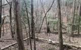 LT304 Creekside Trail - Photo 1