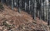 3LOTS Pine Ridge - Photo 10