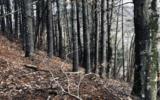 3LOTS Pine Ridge - Photo 11