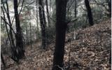 3LOTS Pine Ridge - Photo 13