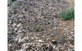 3LOTS Pine Ridge - Photo 6
