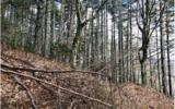 3LOTS Pine Ridge - Photo 7