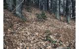 3LOTS Pine Ridge - Photo 9