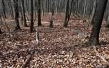 15 The Hemlocks - Photo 10