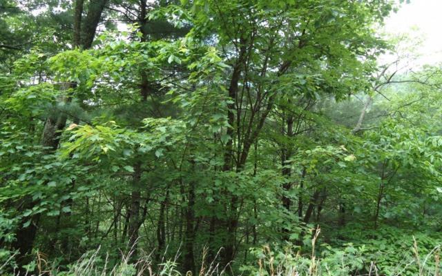 LOT10 Emerald Creek, Young Harris, GA 30582 (MLS #254382) :: Path & Post Real Estate
