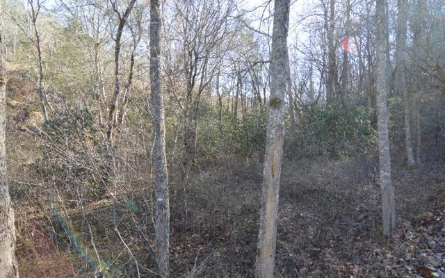 LOT 1 Bridgewater, Hayesville, NC 28904 (MLS #263987) :: Path & Post Real Estate