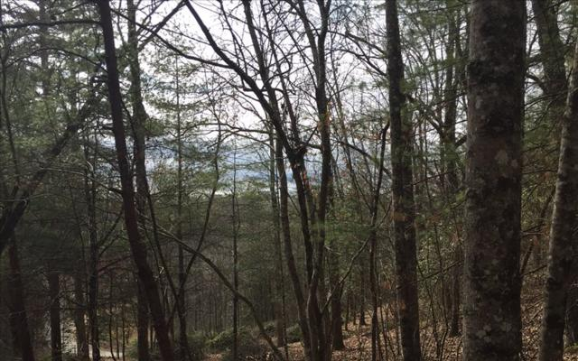 Bear Cub Trail, Mineral Bluff, GA 30559 (MLS #266157) :: RE/MAX Town & Country