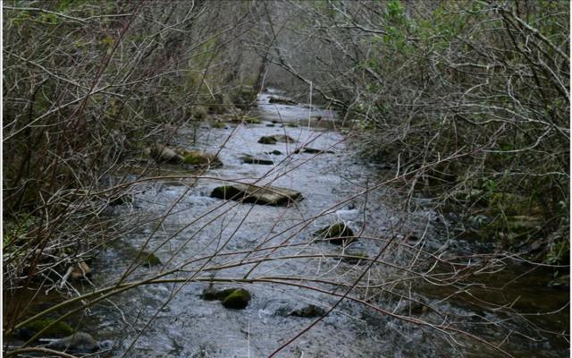 LOT 5 Pine Log Rd, Warne, NC 28909 (MLS #266333) :: RE/MAX Town & Country