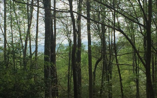 LOT83 Laurel Brooke, Blairsville, GA 30512 (MLS #267138) :: RE/MAX Town & Country