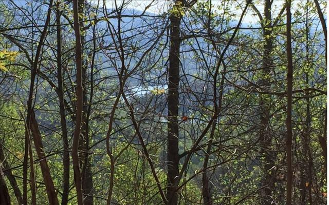 LOT29 Hidden Summit, Hiawassee, GA 30546 (MLS #267180) :: RE/MAX Town & Country