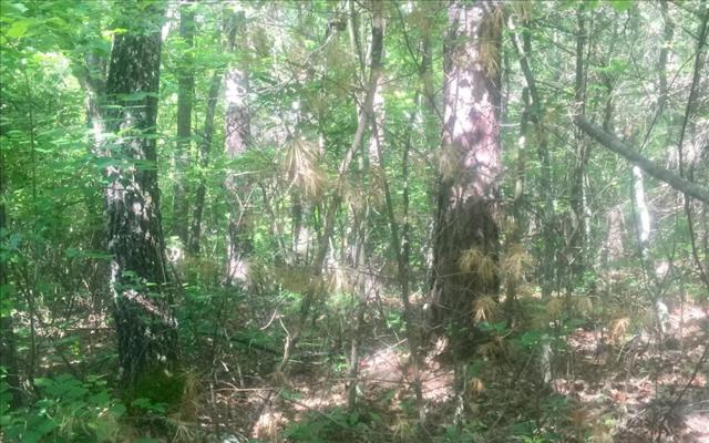 LOT 9 Silver Maple Ph. Ii, Blairsville, GA 30512 (MLS #268552) :: RE/MAX Town & Country