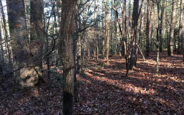 LOT 2 Deerfield, Blue Ridge, GA 30513 (MLS #270148) :: RE/MAX Town & Country