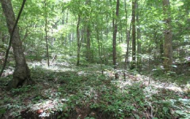 Toccoa Walk-12 Acres, Suches, GA 30572 (MLS #271523) :: RE/MAX Town & Country